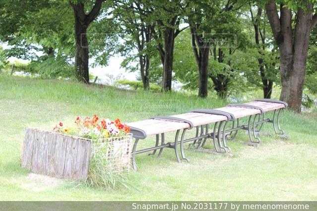 花とベンチの写真・画像素材[2031177]