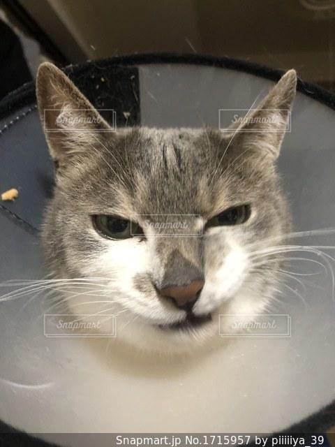 近くに猫のアップの写真・画像素材[1715957]