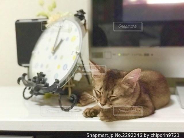 お昼寝中のソマリの子猫の写真・画像素材[2292246]