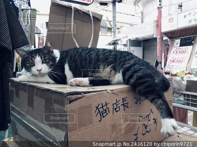 お店の猫店長の写真・画像素材[2436120]
