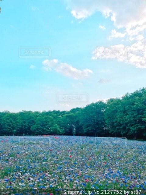野原にいる大勢の人々の写真・画像素材[2127752]