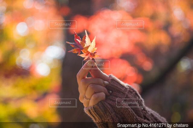 紅葉を持つ女性の手の写真・画像素材[4161271]