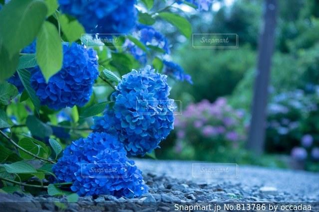 近くのフラワー ガーデンの写真・画像素材[813786]