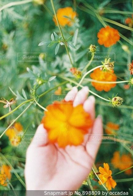 オレンジ色の花と鳥の写真・画像素材[898809]