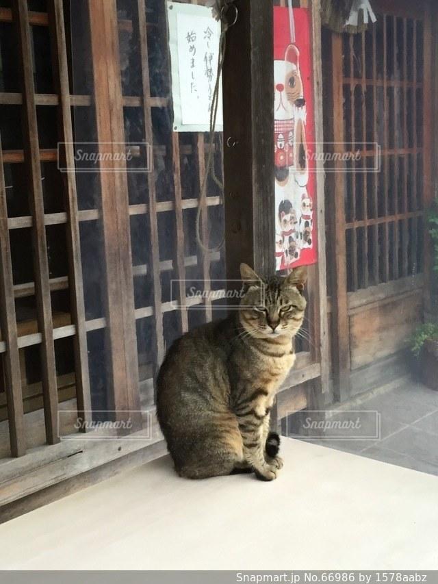 猫の写真・画像素材[66986]