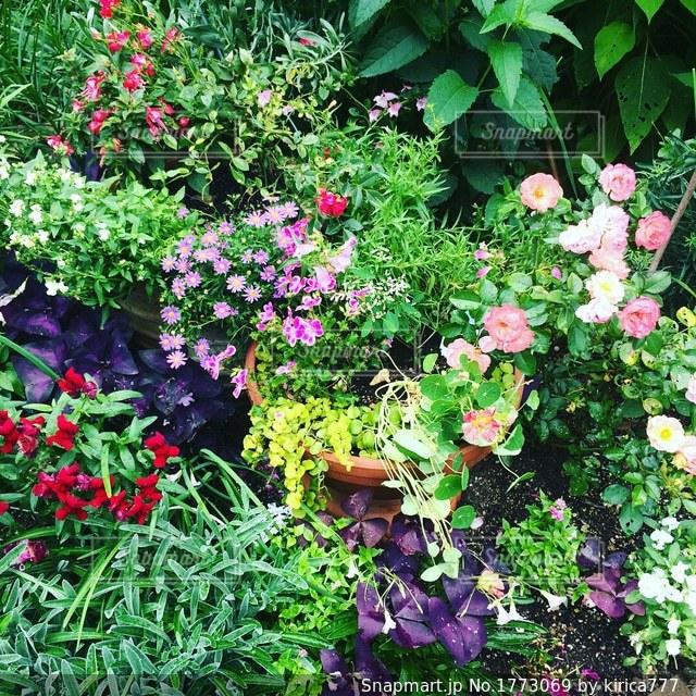 花いっぱいのガーデニングの写真・画像素材[1773069]