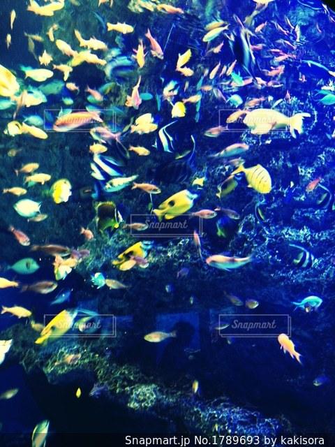 水族館の熱帯魚の写真・画像素材[1789693]