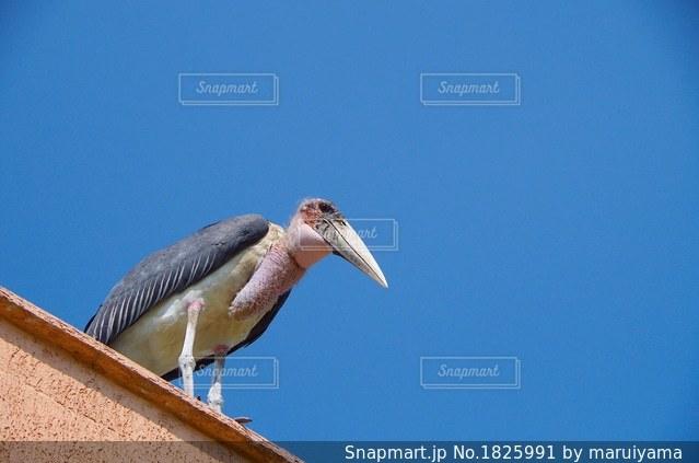 名前の知らない大きな鳥の写真・画像素材[1825991]