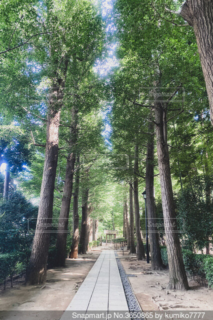 木に囲まれた道の写真・画像素材[3650865]