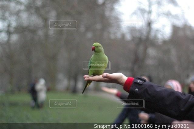 手のひらで休む鳥の写真・画像素材[1800168]