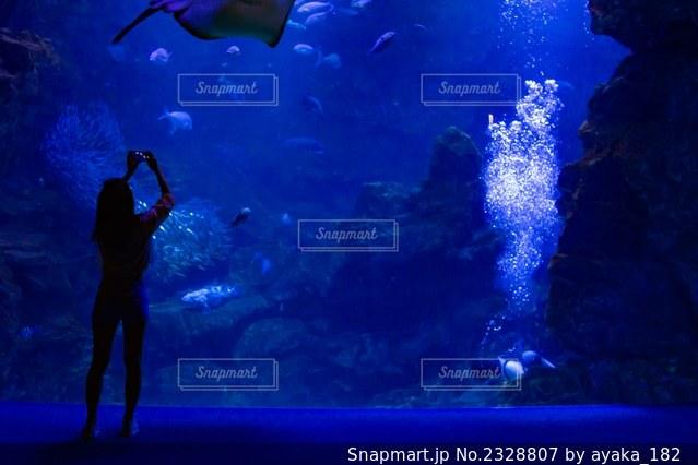 水族館と人のシルエットの写真・画像素材[2328807]