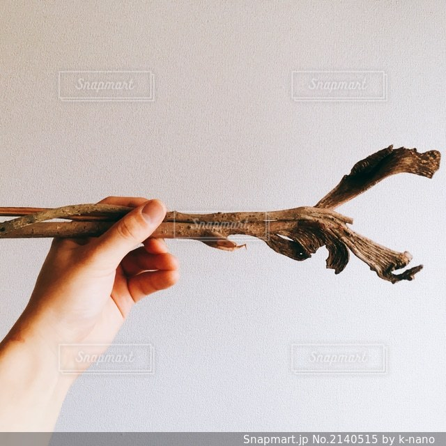 植物の写真・画像素材[2140515]