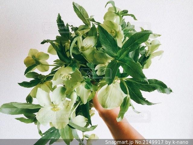 花の写真・画像素材[2149917]
