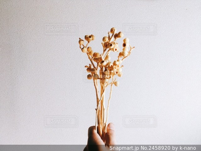 花を持つ手の写真・画像素材[2458920]