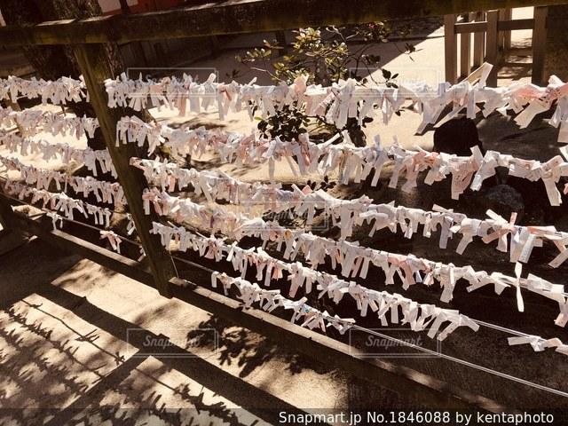 神社のおみくじの写真・画像素材[1846088]