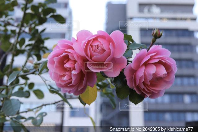 都会に咲く花の写真・画像素材[2842305]