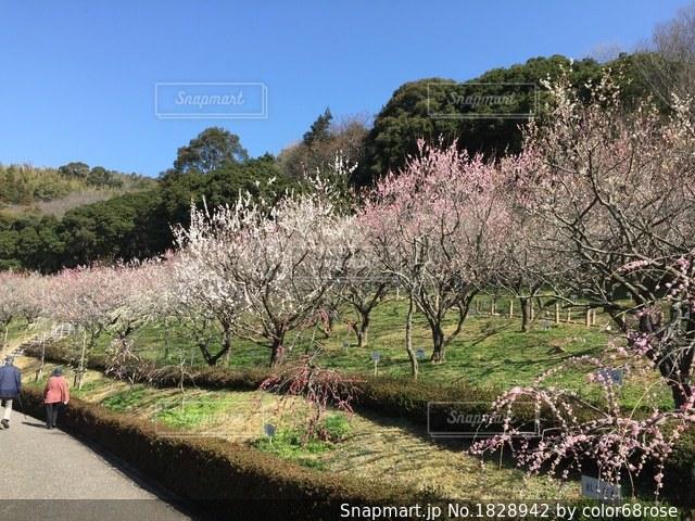 早春の景色の写真・画像素材[1828942]