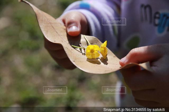 小さな手と小さな花の写真・画像素材[3134655]