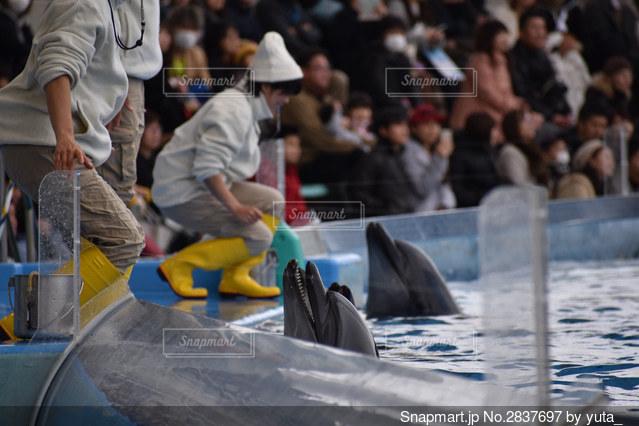 名古屋港水族館イルカショーの写真・画像素材[2837697]