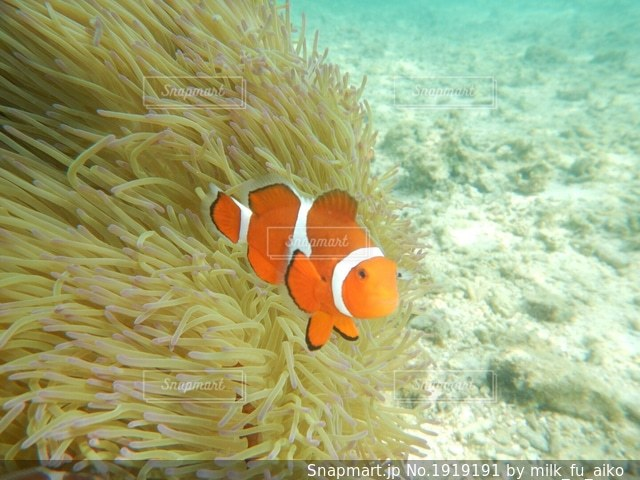 水の中のオレンジ色の魚の写真・画像素材[1919191]
