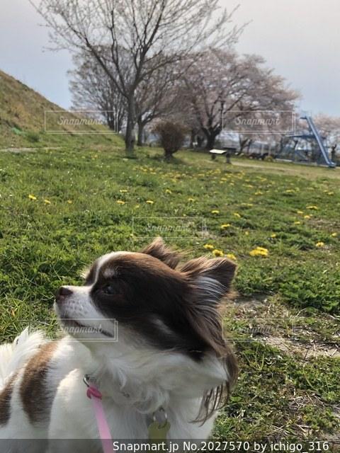 犬の写真・画像素材[2027570]