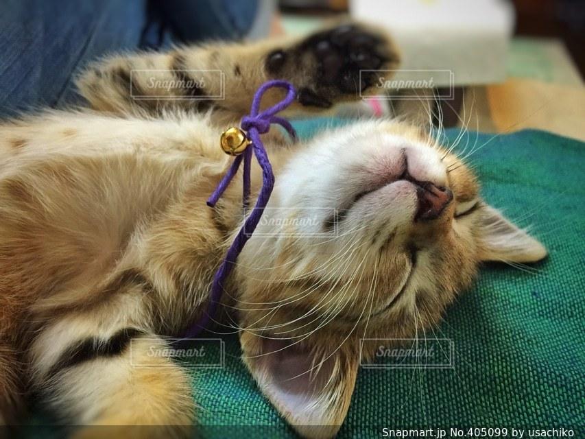 猫の写真・画像素材[405099]
