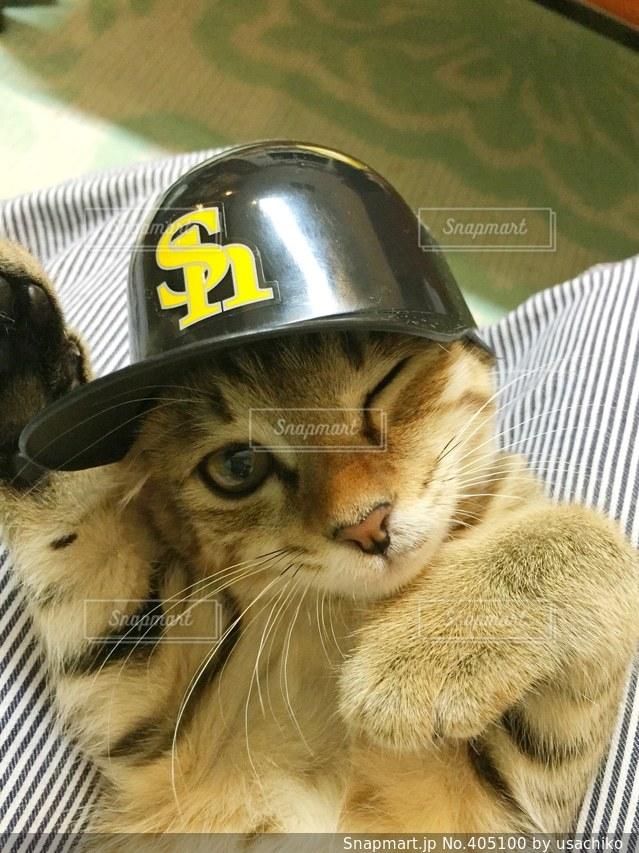 猫,帽子,子猫,ソフトバンクホークス,ウインク
