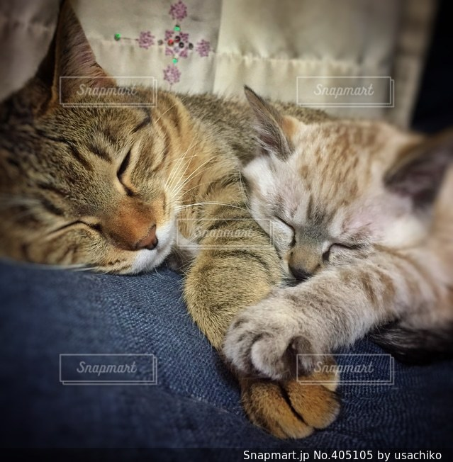 猫の写真・画像素材[405105]