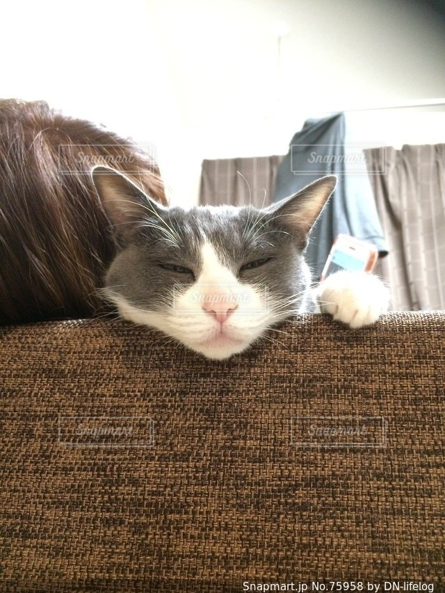 猫の写真・画像素材[75958]
