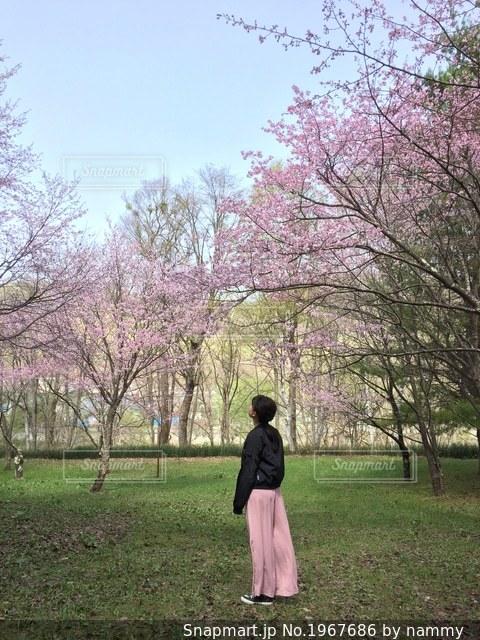 桜を見上げる少女の写真・画像素材[1967686]
