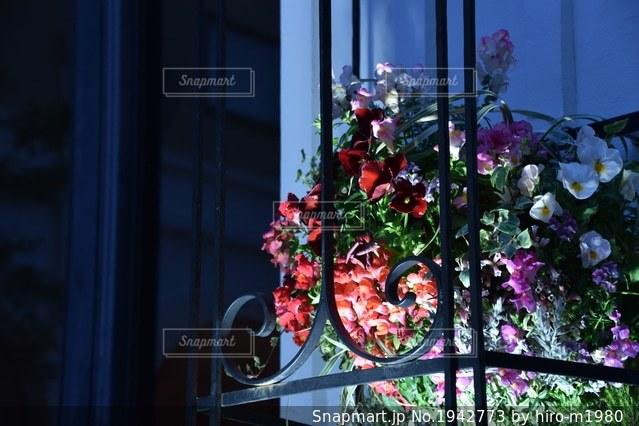 妖美な花の写真・画像素材[1942773]