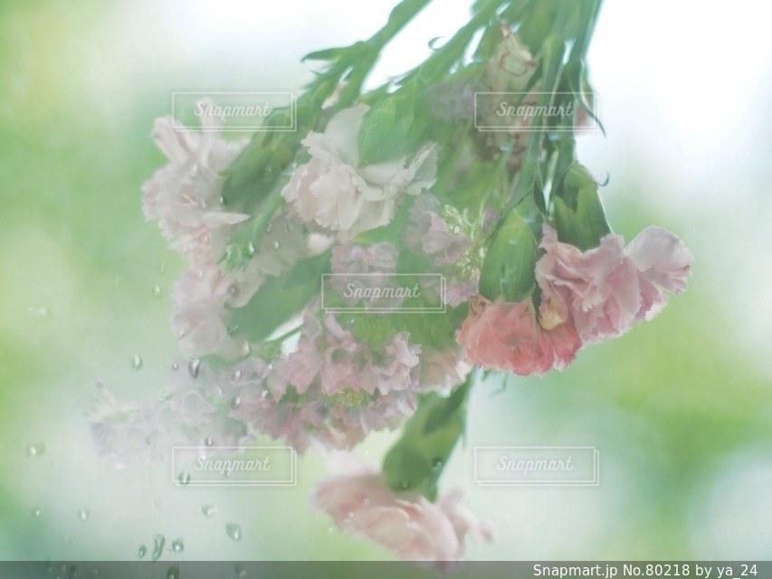 花の写真・画像素材[80218]