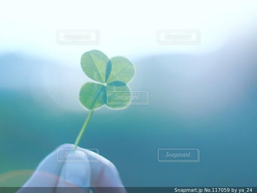 植物の写真・画像素材[117059]