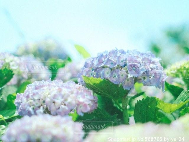 花の写真・画像素材[568765]