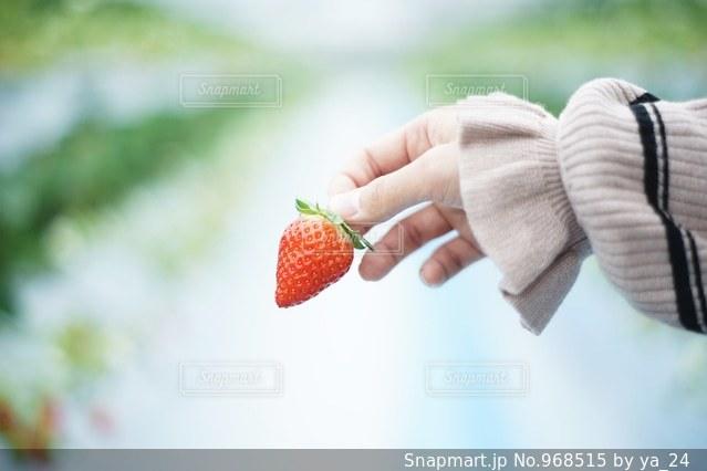 果物を持っている手の写真・画像素材[968515]