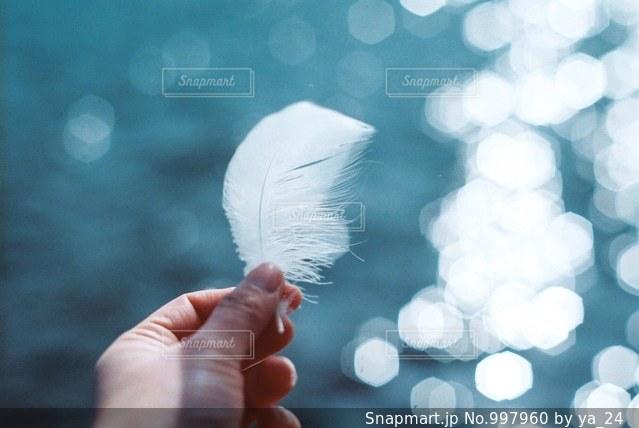 羽根の写真・画像素材[997960]