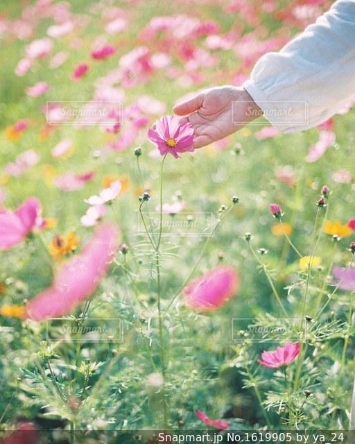 花を持っている人の写真・画像素材[1619905]