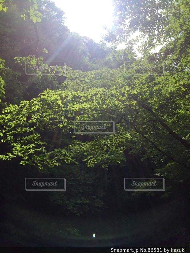 自然の写真・画像素材[86581]