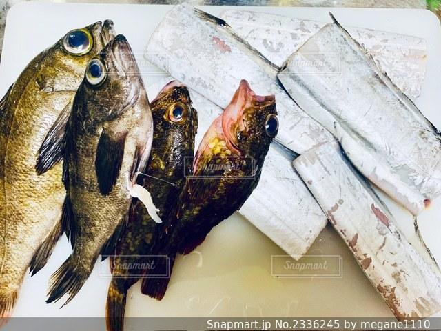 海で取れた魚達🐟の写真・画像素材[2336245]