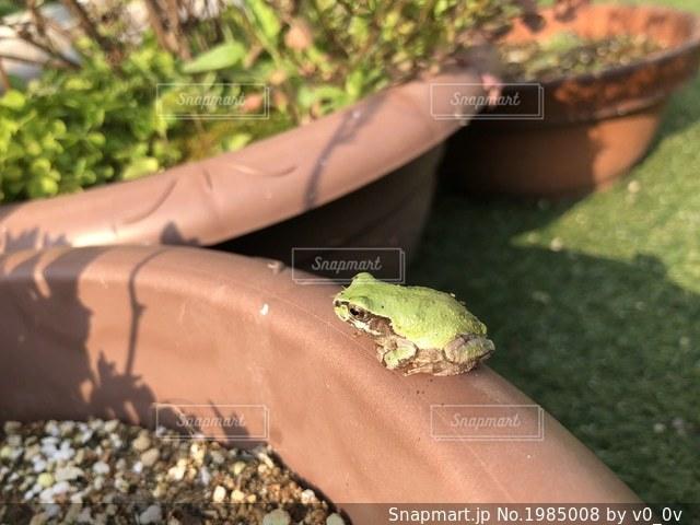 カエルの写真・画像素材[1985008]