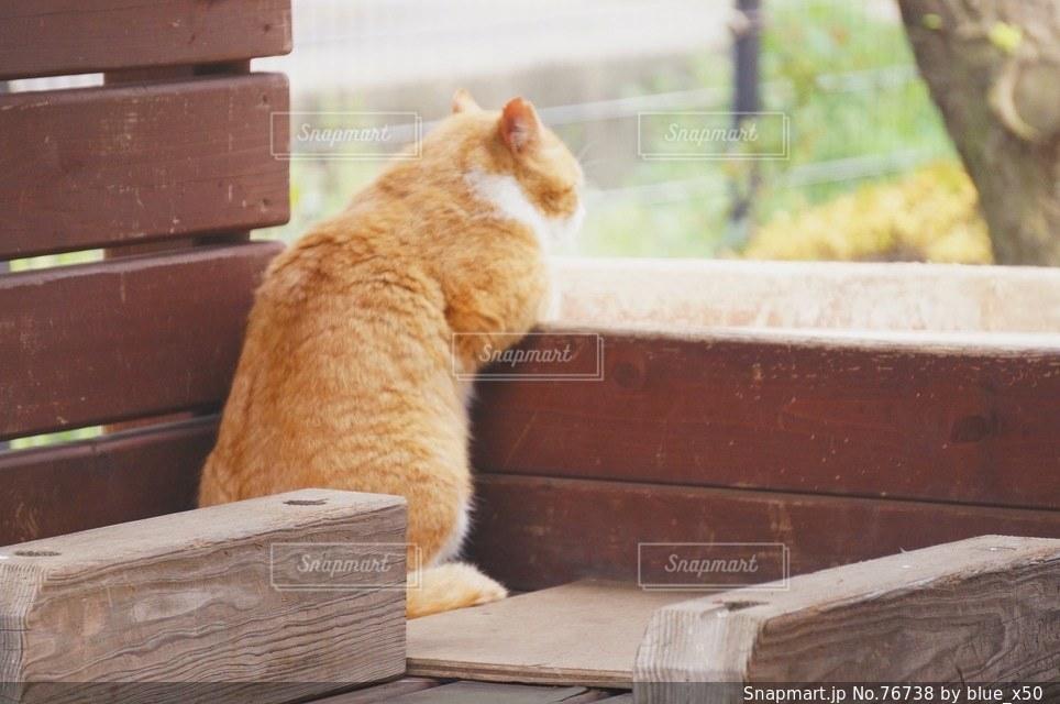 猫の写真・画像素材[76738]