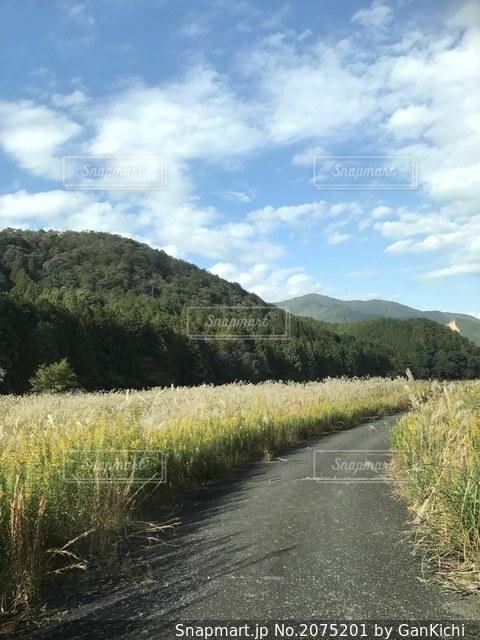 夏の山と畑の写真・画像素材[2075201]