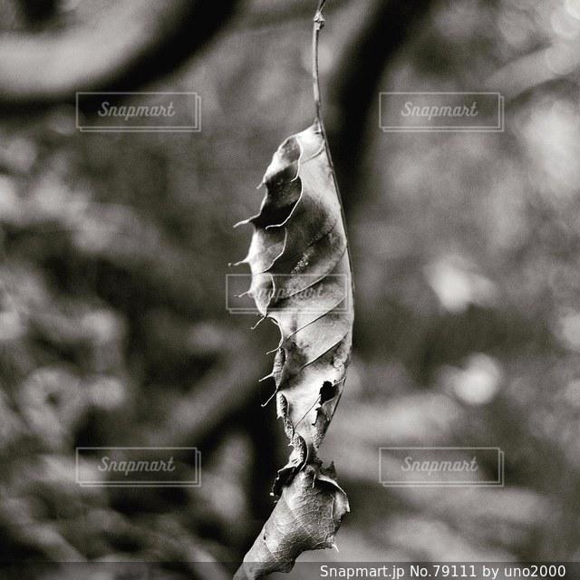 森林 - No.79111