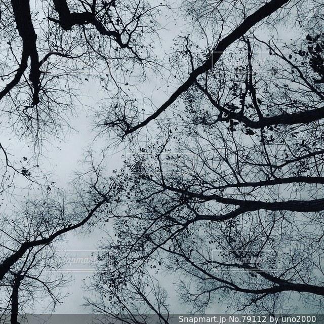 森林 - No.79112