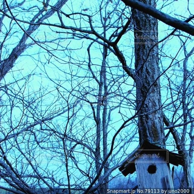 森林 - No.79113