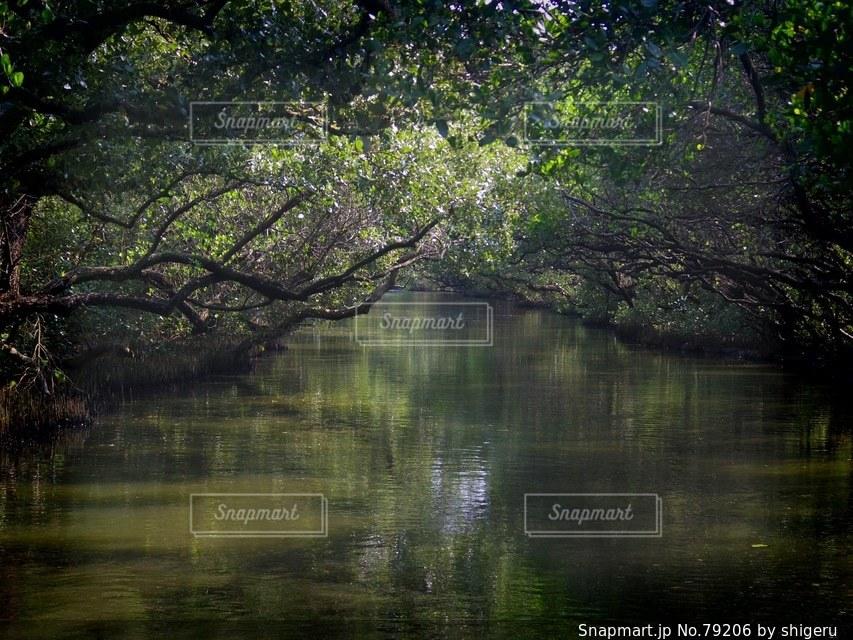 森林 - No.79206