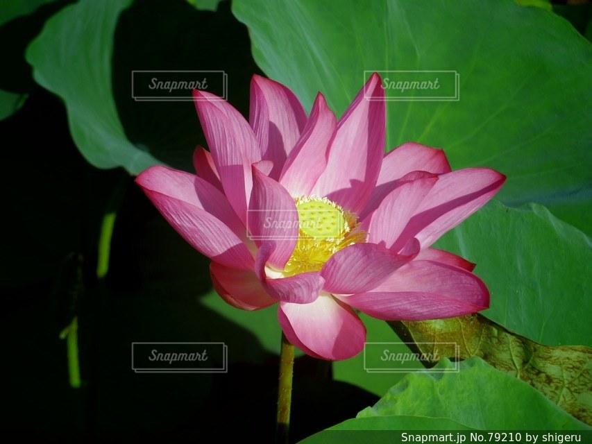 花の写真・画像素材[79210]