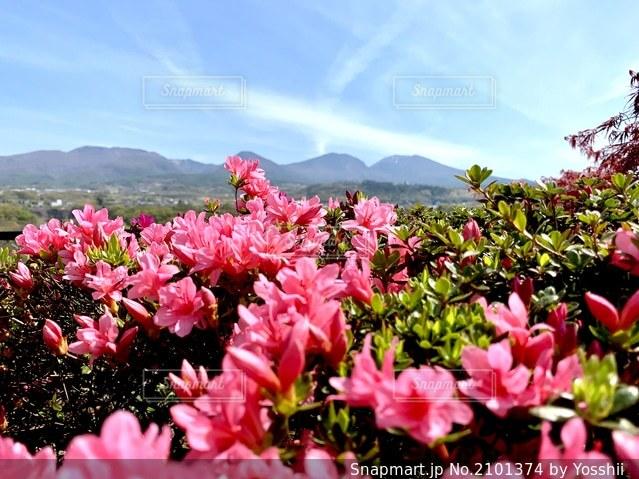 植物の上のピンクの花の写真・画像素材[2101374]
