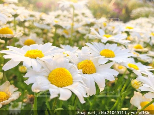 明るい花の写真・画像素材[2106911]