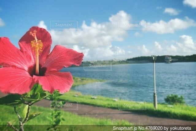 島に咲く花の写真・画像素材[4769020]